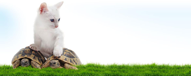 raffavet-letargo-tartarughe-slide